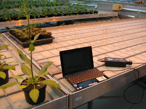 Application of specbos 1211 in a greenhouse